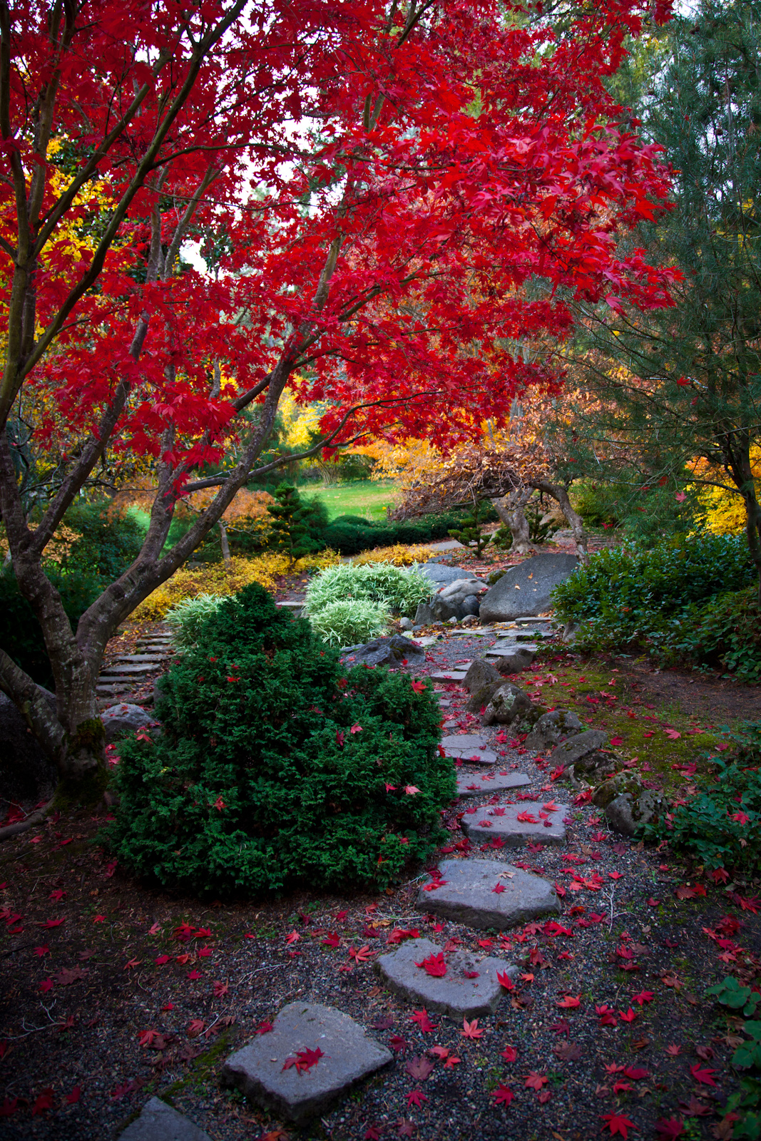 A second scene at the Japanese Gardens in Lithia Park.