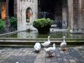 Resident guests at the Barcelona Cathedral.