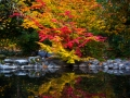 Fall colors at the Upper Duck Pond in Lithia Park in Ashland.