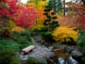 One of my favorite photos from this year... the Japanese Garden area in Lithia Park.  This was one of the best Fall colors ever!
